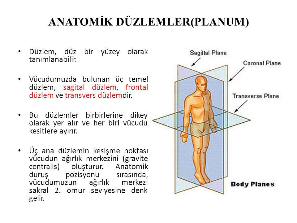 ANATOMİK DÜZLEMLER(PLANUM) Düzlem, düz bir yüzey olarak tanımlanabilir. Vücudumuzda bulunan üç temel düzlem, sagital düzlem, frontal düzlem ve transve