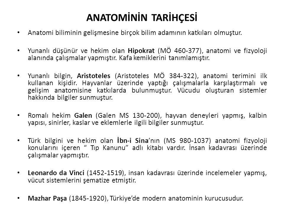 ANATOMİNİN TARİHÇESİ Anatomi biliminin gelişmesine birçok bilim adamının katkıları olmuştur. Yunanlı düşünür ve hekim olan Hipokrat (MÖ 460-377), anat