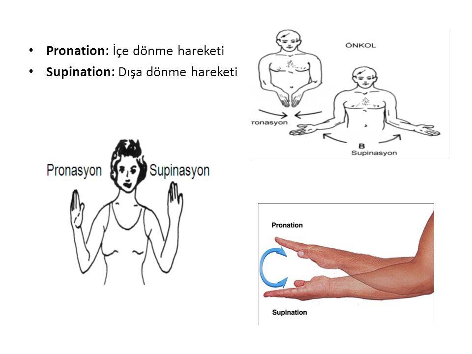 Pronation: İçe dönme hareketi Supination: Dışa dönme hareketi
