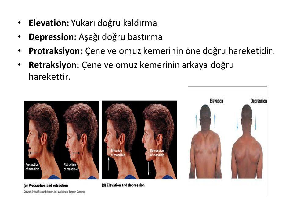Elevation: Yukarı doğru kaldırma Depression: Aşağı doğru bastırma Protraksiyon: Çene ve omuz kemerinin öne doğru hareketidir. Retraksiyon: Çene ve omu