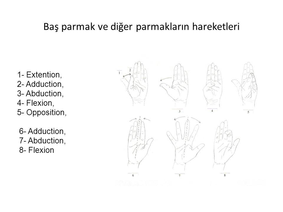 Baş parmak ve diğer parmakların hareketleri 1- Extention, 2- Adduction, 3- Abduction, 4- Flexion, 5- Opposition, 6- Adduction, 7- Abduction, 8- Flexio