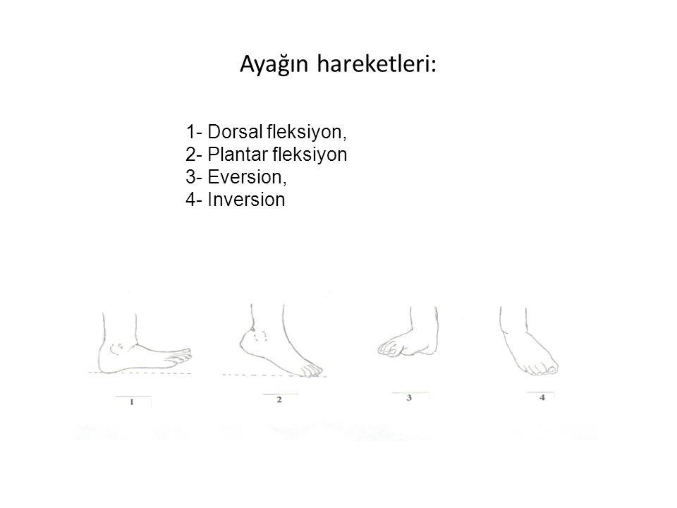 Ayağın hareketleri: 1- Dorsal fleksiyon, 2- Plantar fleksiyon 3- Eversion, 4- Inversion