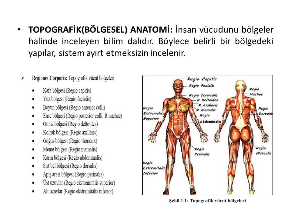 TOPOGRAFİK(BÖLGESEL) ANATOMİ: İnsan vücudunu bölgeler halinde inceleyen bilim dalıdır. Böylece belirli bir bölgedeki yapılar, sistem ayırt etmeksizin