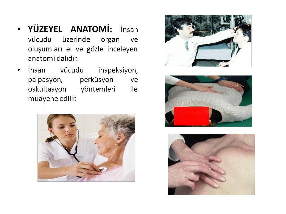 YÜZEYEL ANATOMİ: İnsan vücudu üzerinde organ ve oluşumları el ve gözle inceleyen anatomi dalıdır. İnsan vücudu inspeksiyon, palpasyon, perküsyon ve os
