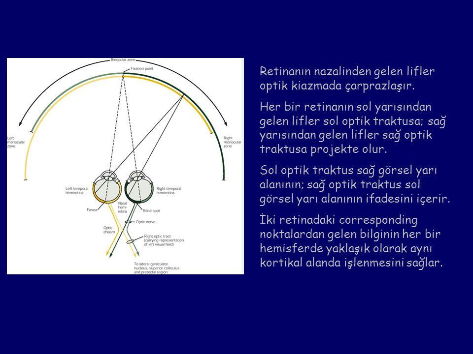 Retinanın nazalinden gelen lifler optik kiazmada çarprazlaşır. Her bir retinanın sol yarısından gelen lifler sol optik traktusa; sağ yarısından gelen