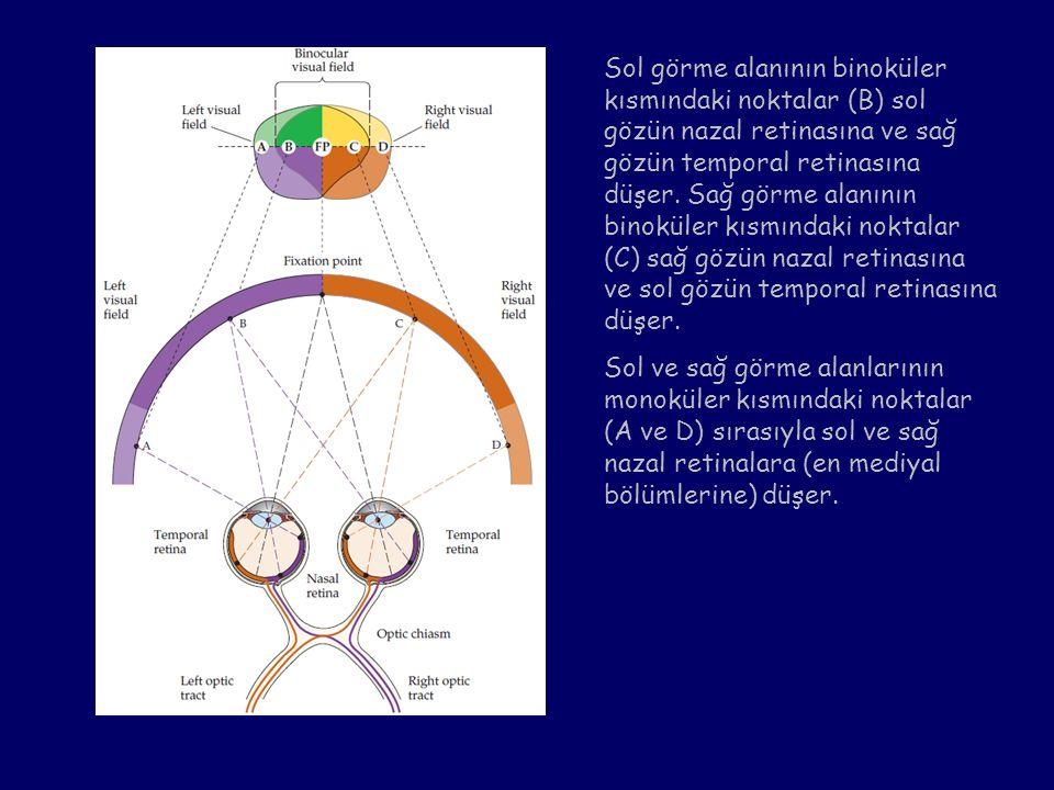 Sol görme alanının binoküler kısmındaki noktalar (B) sol gözün nazal retinasına ve sağ gözün temporal retinasına düşer. Sağ görme alanının binoküler k