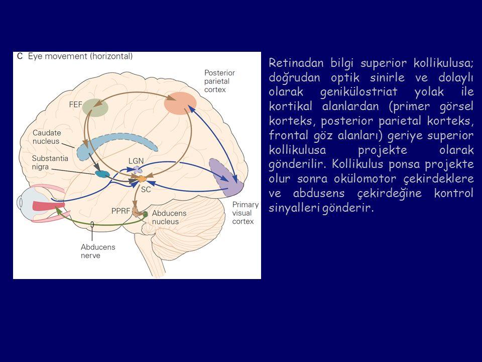 Retinadan bilgi superior kollikulusa; doğrudan optik sinirle ve dolaylı olarak genikülostriat yolak ile kortikal alanlardan (primer görsel korteks, po