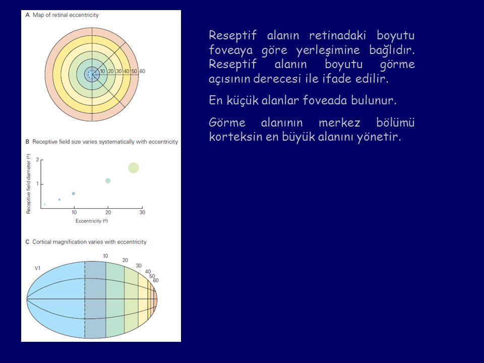 Reseptif alanın retinadaki boyutu foveaya göre yerleşimine bağlıdır. Reseptif alanın boyutu görme açısının derecesi ile ifade edilir. En küçük alanlar