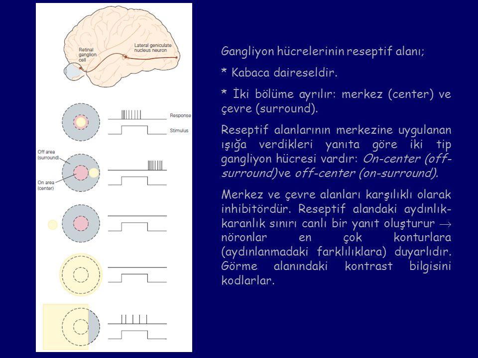 Gangliyon hücrelerinin reseptif alanı; * Kabaca daireseldir. * İki bölüme ayrılır: merkez (center) ve çevre (surround). Reseptif alanlarının merkezine