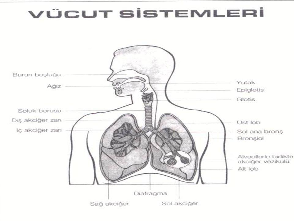 ÜST SOLUNUM YOLU ENFEKSİYONLARI FARENJİT: Farenks, burun ve ağız boşluğunun arka kısmında yer alır.