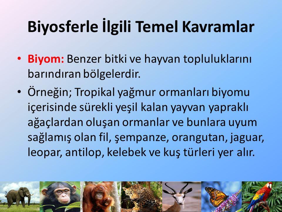 BİYOMLAR