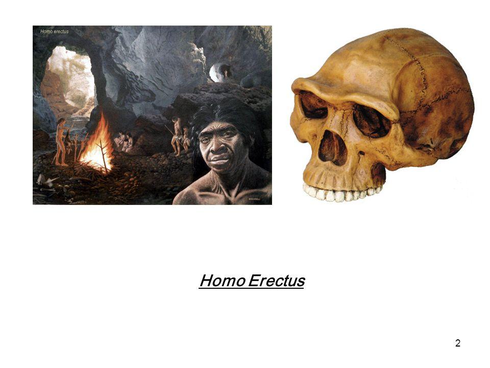 2 Homo Erectus