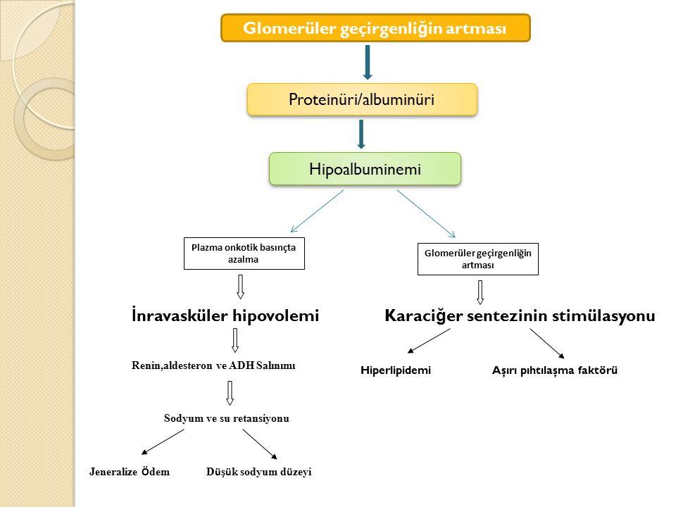Glomerüler geçirgenli ğ in artması Proteinüri/albuminüri Hipoalbuminemi Plazma onkotik basınçta azalma Glomerüler geçirgenliğin artması İ nravasküler
