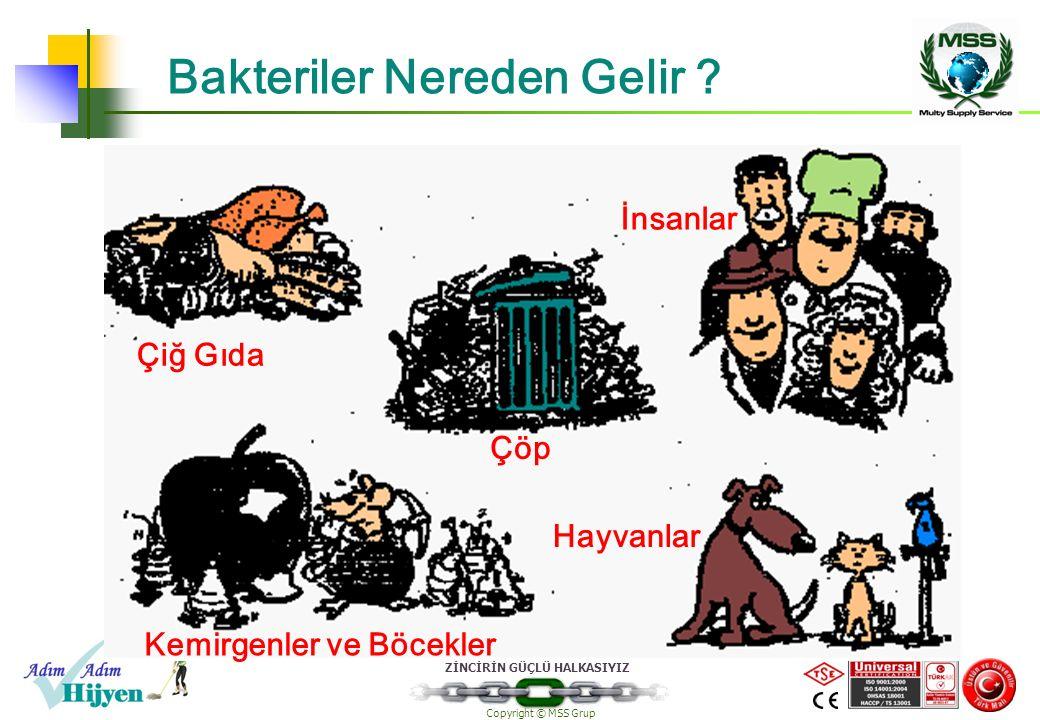 ZİNCİRİN GÜÇLÜ HALKASIYIZ Copyright © MSS Grup Bakteriler Nereden Gelir ? Çiğ Gıda Çöp İnsanlar Kemirgenler ve Böcekler Hayvanlar