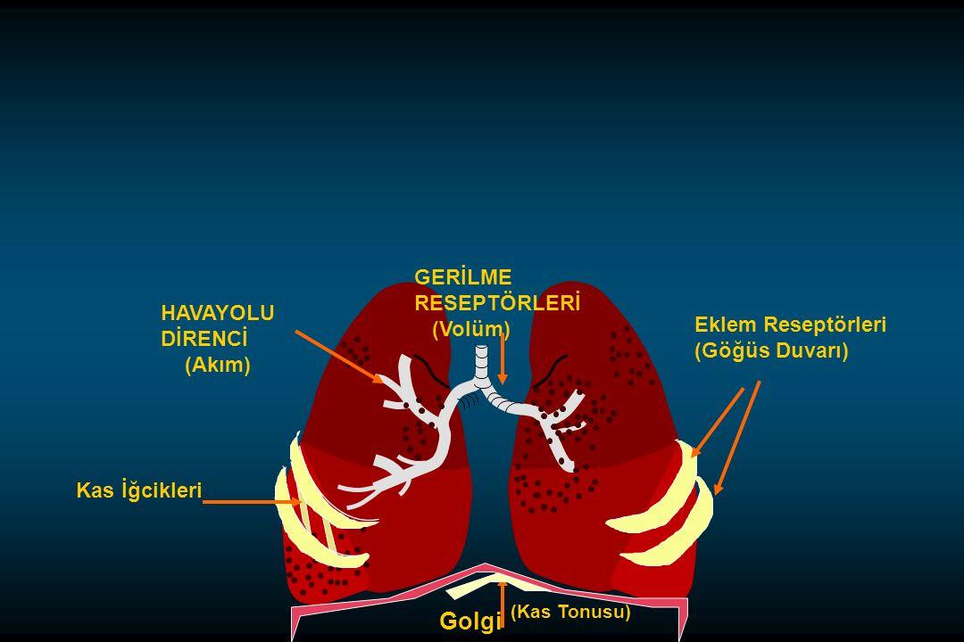 Eklem Reseptörleri (Göğüs Duvarı) Golgi (Kas Tonusu) GERİLME RESEPTÖRLERİ (Volüm) HAVAYOLU DİRENCİ (Akım) Kas İğcikleri