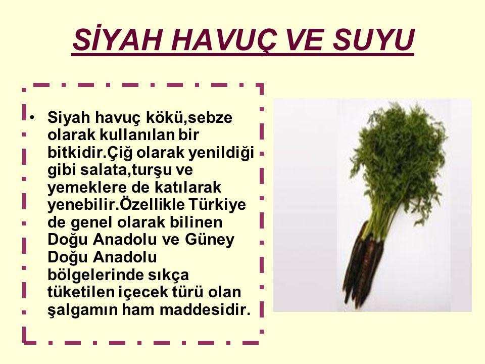 SİYAH HAVUÇ VE SUYU Siyah havuç kökü,sebze olarak kullanılan bir bitkidir.Çiğ olarak yenildiği gibi salata,turşu ve yemeklere de katılarak yenebilir.Ö