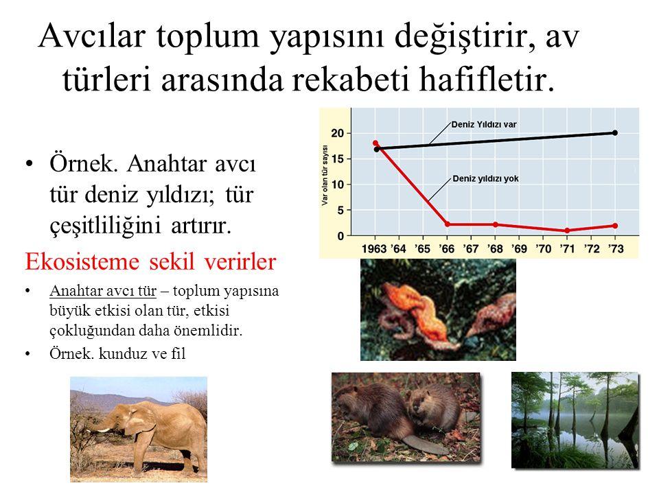 Avcılar toplum yapısını değiştirir, av türleri arasında rekabeti hafifletir. Örnek. Anahtar avcı tür deniz yıldızı; tür çeşitliliğini artırır. Ekosist