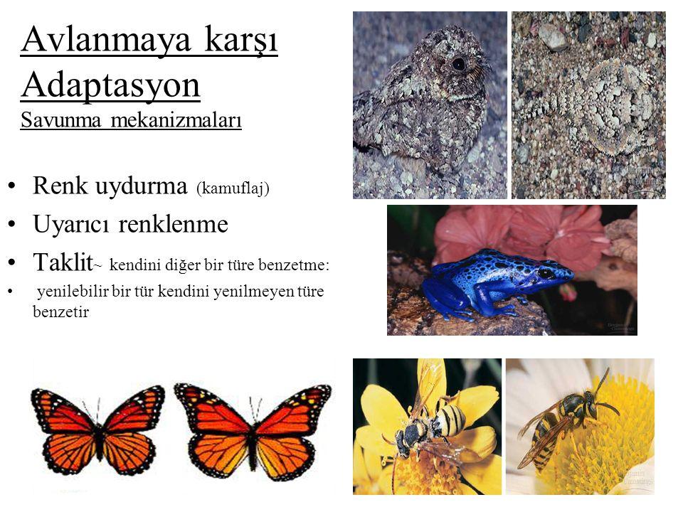 Avlanmaya karşı Adaptasyon Savunma mekanizmaları Renk uydurma (kamuflaj) Uyarıcı renklenme Taklit ~ kendini diğer bir türe benzetme: yenilebilir bir t