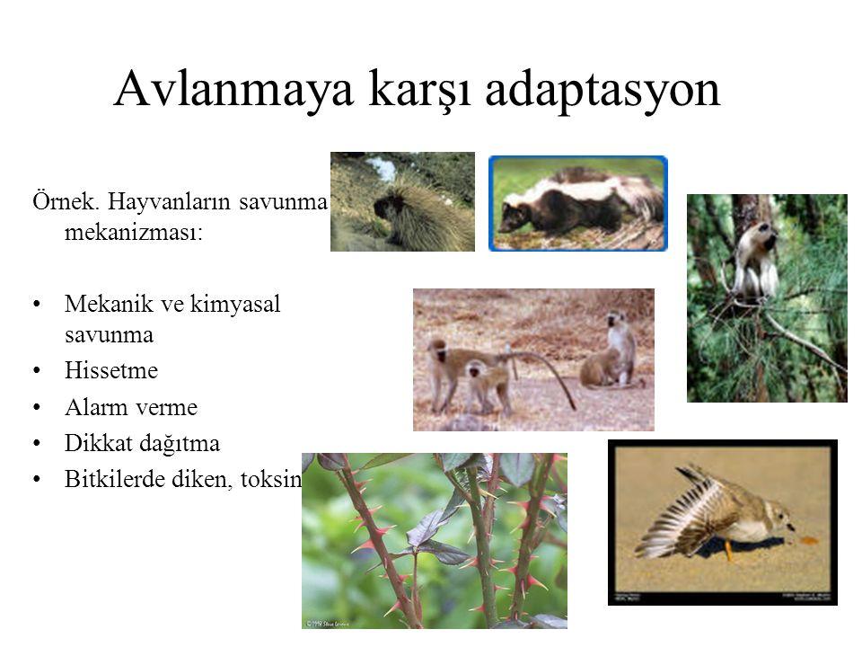Avlanmaya karşı adaptasyon Örnek. Hayvanların savunma mekanizması: Mekanik ve kimyasal savunma Hissetme Alarm verme Dikkat dağıtma Bitkilerde diken, t