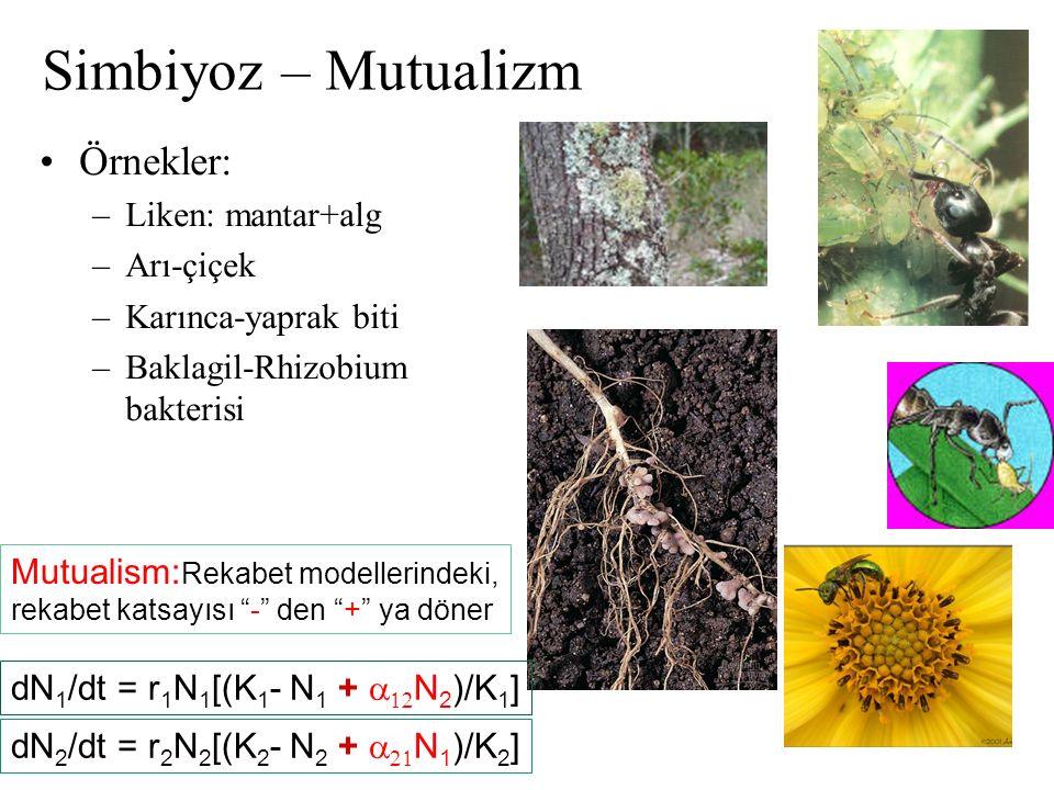 Simbiyoz – Mutualizm Örnekler: –Liken: mantar+alg –Arı-çiçek –Karınca-yaprak biti –Baklagil-Rhizobium bakterisi dN 1 /dt = r 1 N 1 [(K 1 - N 1 +  