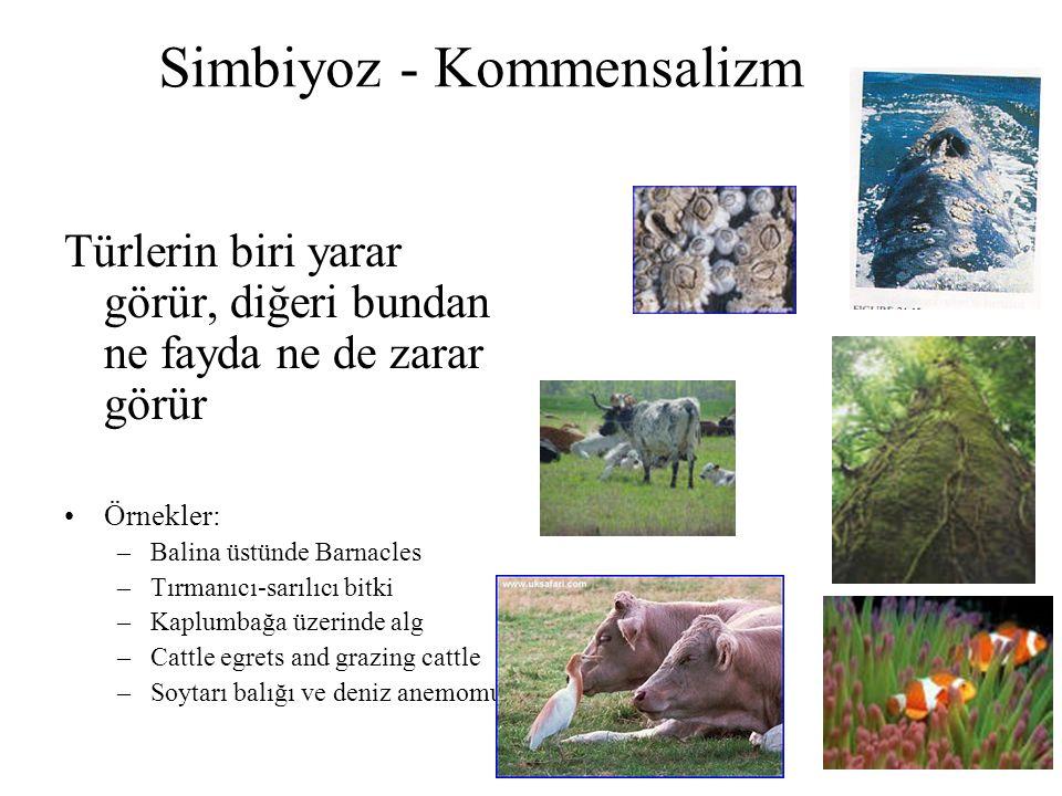 Simbiyoz - Kommensalizm Türlerin biri yarar görür, diğeri bundan ne fayda ne de zarar görür Örnekler: –Balina üstünde Barnacles –Tırmanıcı-sarılıcı bi