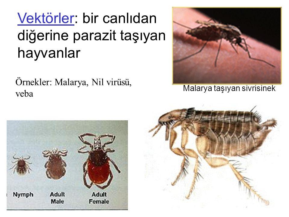 Malarya taşıyan sivrisinek Vektörler: bir canlıdan diğerine parazit taşıyan hayvanlar Örnekler: Malarya, Nil virüsü, veba
