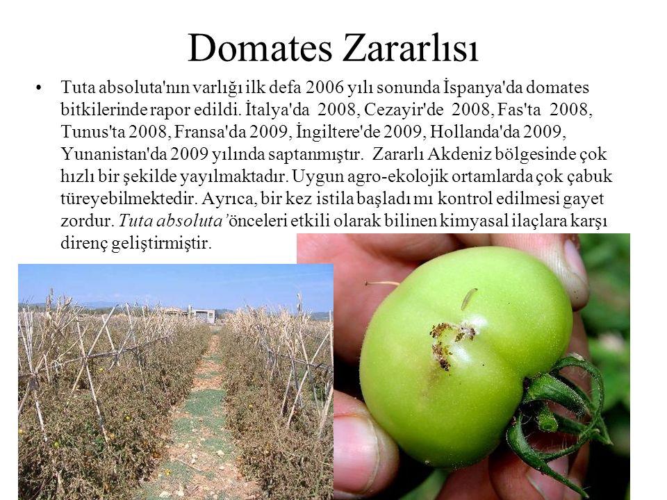 Domates Zararlısı Tuta absoluta'nın varlığı ilk defa 2006 yılı sonunda İspanya'da domates bitkilerinde rapor edildi. İtalya'da 2008, Cezayir'de 2008,