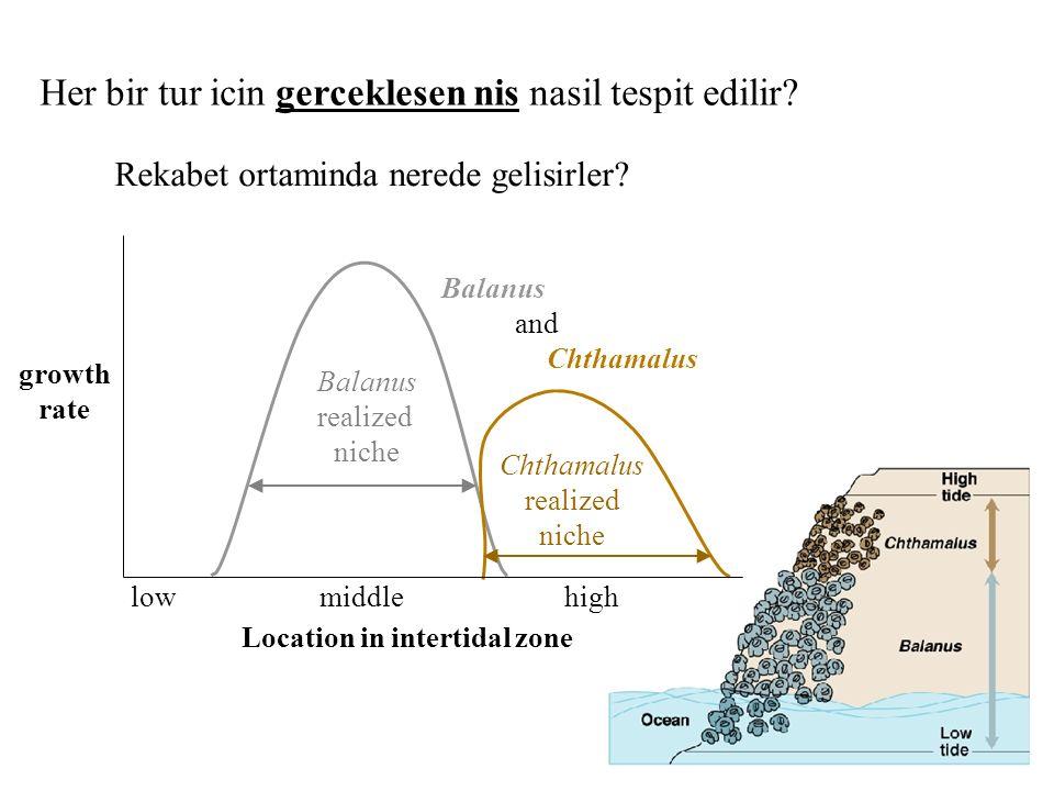 growth rate Location in intertidal zone lowhighmiddle Her bir tur icin gerceklesen nis nasil tespit edilir? Rekabet ortaminda nerede gelisirler? Balan