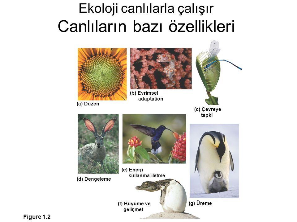 Ekoloji canlılarla çalışır Canlıların bazı özellikleri Figure 1.2 (c) Çevreye tepki (a) Düzen (d) Dengeleme (g) Üreme (f) Büyüme ve gelişmet (b) Evrim