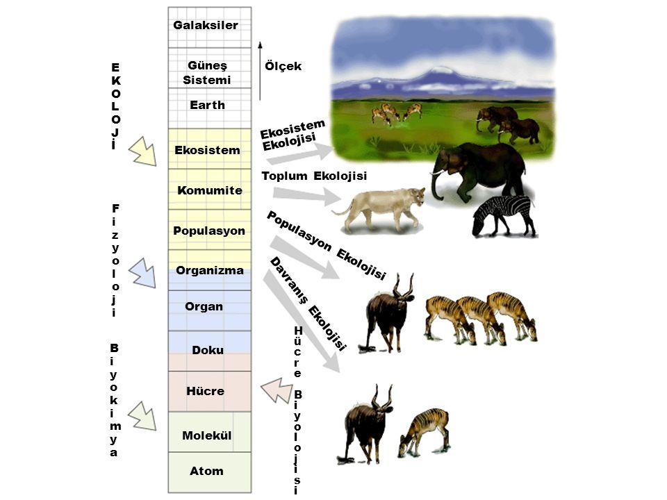 Galaksiler Güneş Sistemi Earth Ekosistem Komumite Populasyon Organizma Organ Doku Hücre Molekül Atom Ölçek Ekosistem Ekolojisi Toplum Ekolojisi Popula