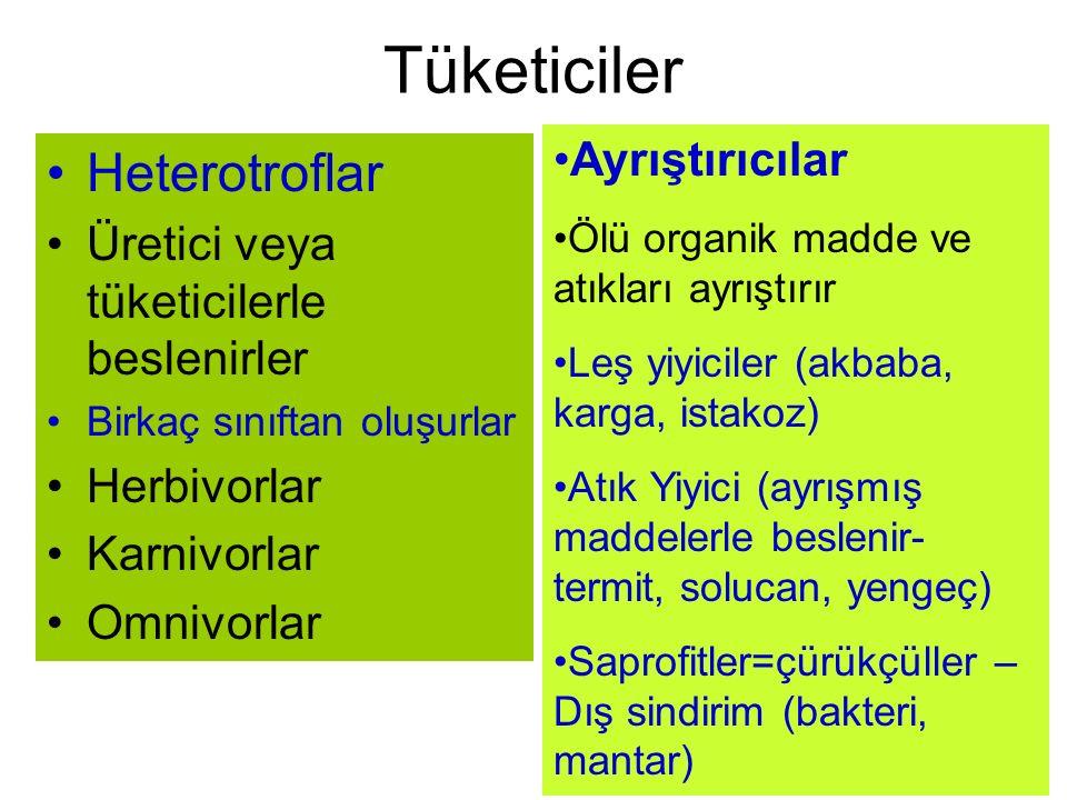 Tüketiciler Heterotroflar Üretici veya tüketicilerle beslenirler Birkaç sınıftan oluşurlar Herbivorlar Karnivorlar Omnivorlar Ayrıştırıcılar Ölü organ