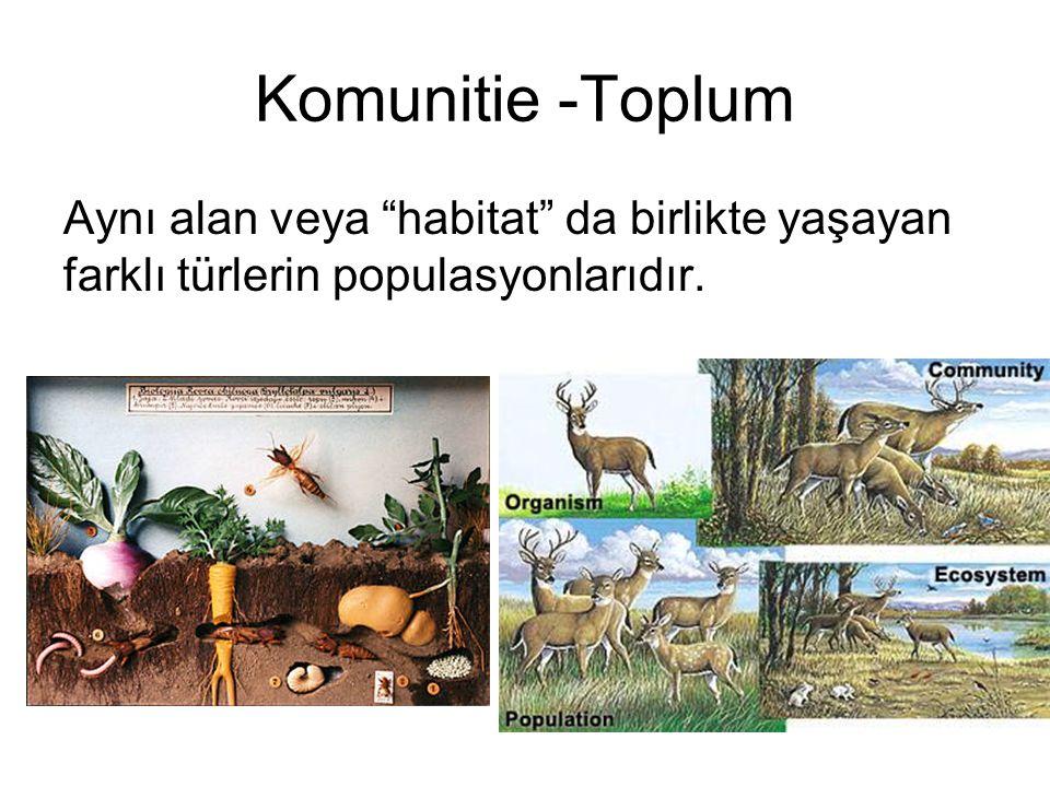 """Komunitie -Toplum Aynı alan veya """"habitat"""" da birlikte yaşayan farklı türlerin populasyonlarıdır."""