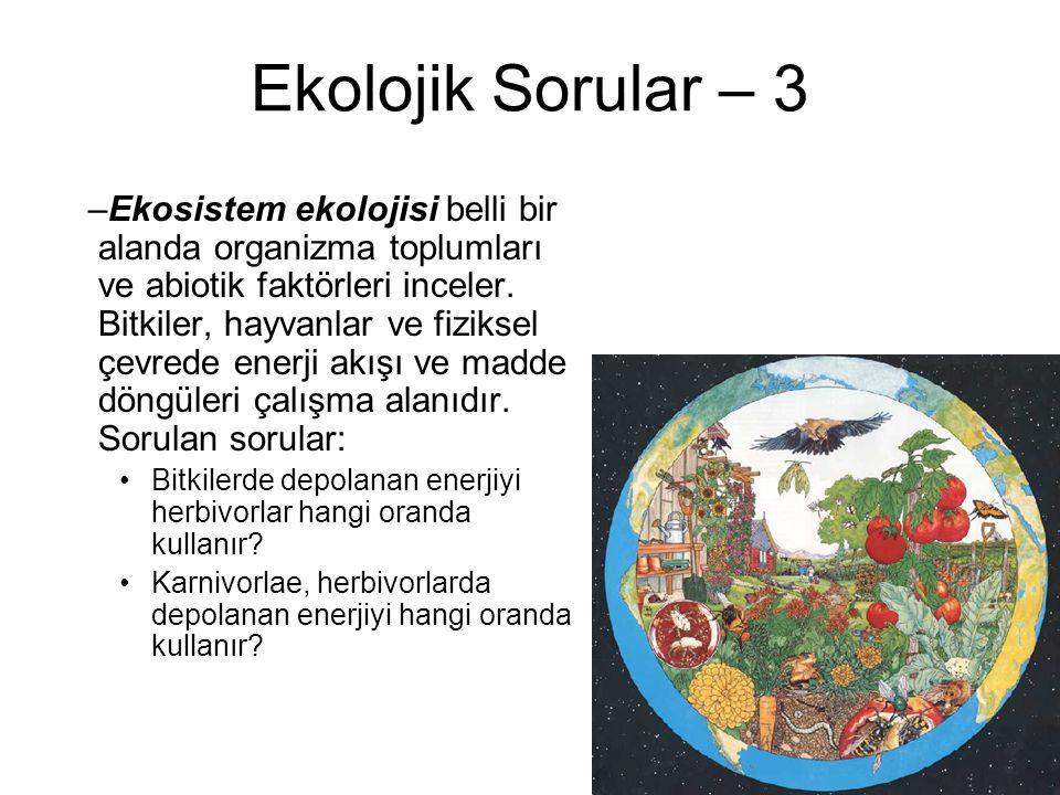 Ekolojik Sorular – 3 –Ekosistem ekolojisi belli bir alanda organizma toplumları ve abiotik faktörleri inceler. Bitkiler, hayvanlar ve fiziksel çevrede