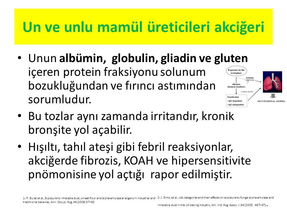 Un ve unlu mamül üreticileri akciğeri Unun albümin, globulin, gliadin ve gluten içeren protein fraksiyonu solunum bozukluğundan ve fırıncı astımından