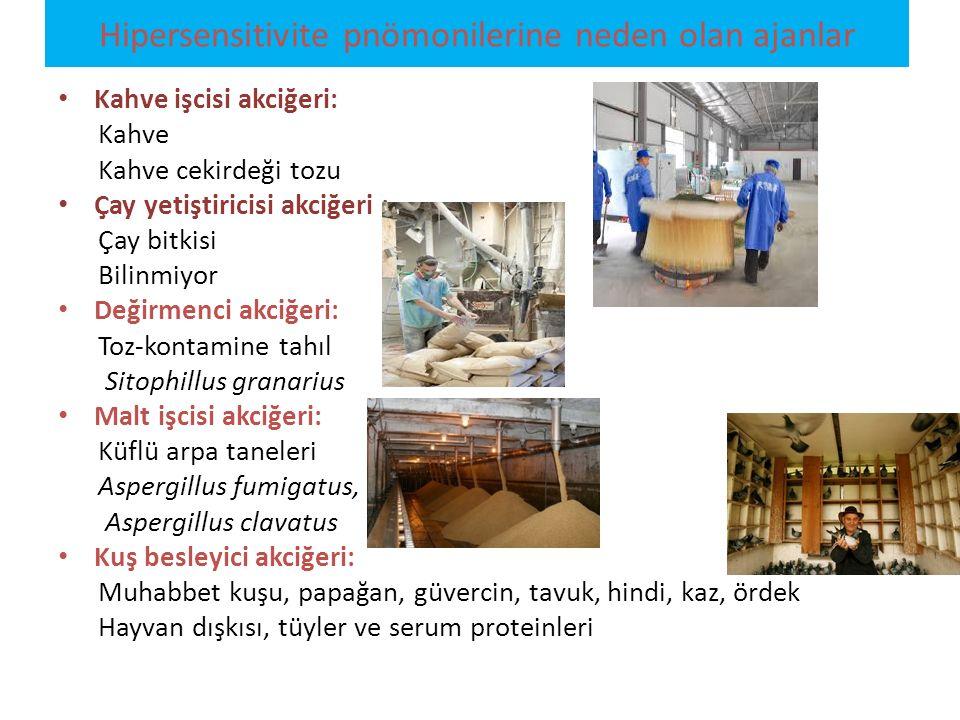 Kahve işcisi akciğeri: Kahve Kahve cekirdeği tozu Çay yetiştiricisi akciğeri : Çay bitkisi Bilinmiyor Değirmenci akciğeri: Toz-kontamine tahıl Sitophi