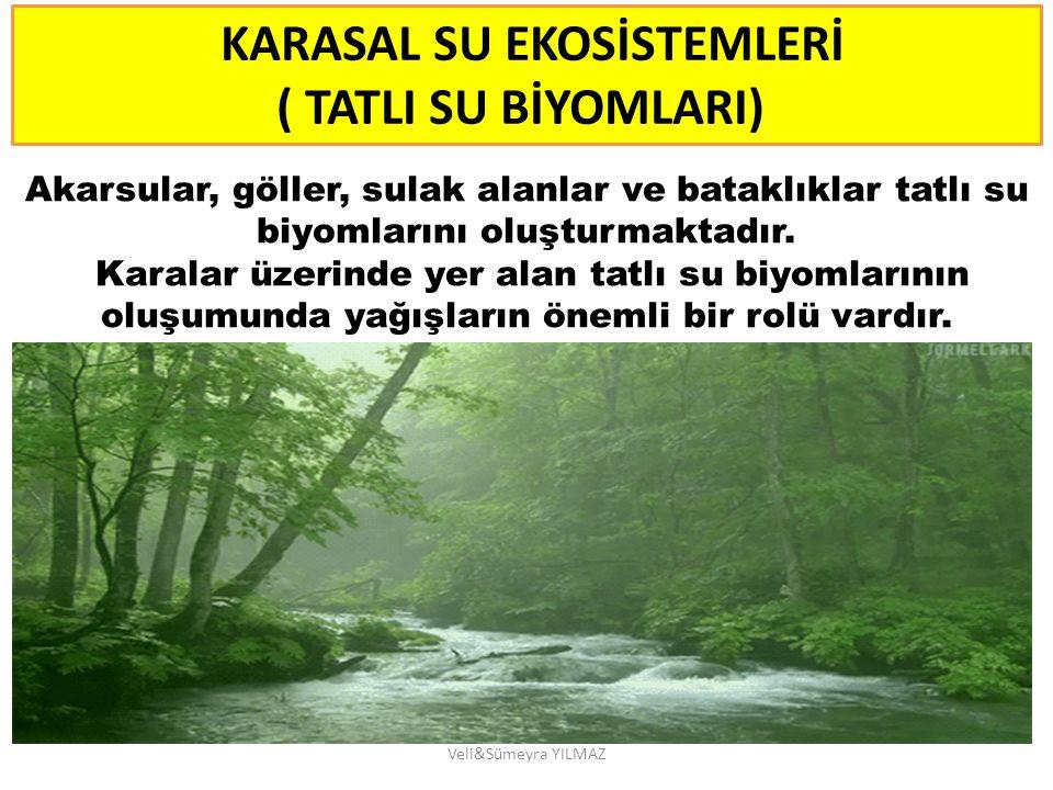 Veli&Sümeyra YILMAZ KARASAL SU EKOSİSTEMLERİ ( TATLI SU BİYOMLARI) Akarsular, göller, sulak alanlar ve bataklıklar tatlı su biyomlarını oluşturmaktadı