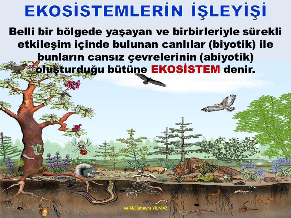 EKOSİSTEM CANLI ÖĞELER Bitkiler Hayvanlar Mikroorganizmalar CANSIZ ÖĞELER A.) Fiziksel Etmenler Isı Sıcaklık Rüzgar Yağış B.) Kimyasal Etmenler İnorganik Etmenler Su Karbondioksit Oksijen….