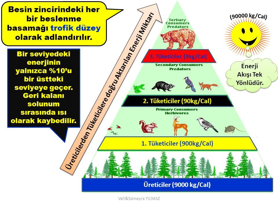 Veli&Sümeyra YILMAZ Üreticiler (9000 kg/Cal) 1. Tüketiciler (900kg/Cal) 2. Tüketiciler (90kg/Cal) 3. Tüketiciler (9kg/Cal) Üreticilerden Tüketicilere
