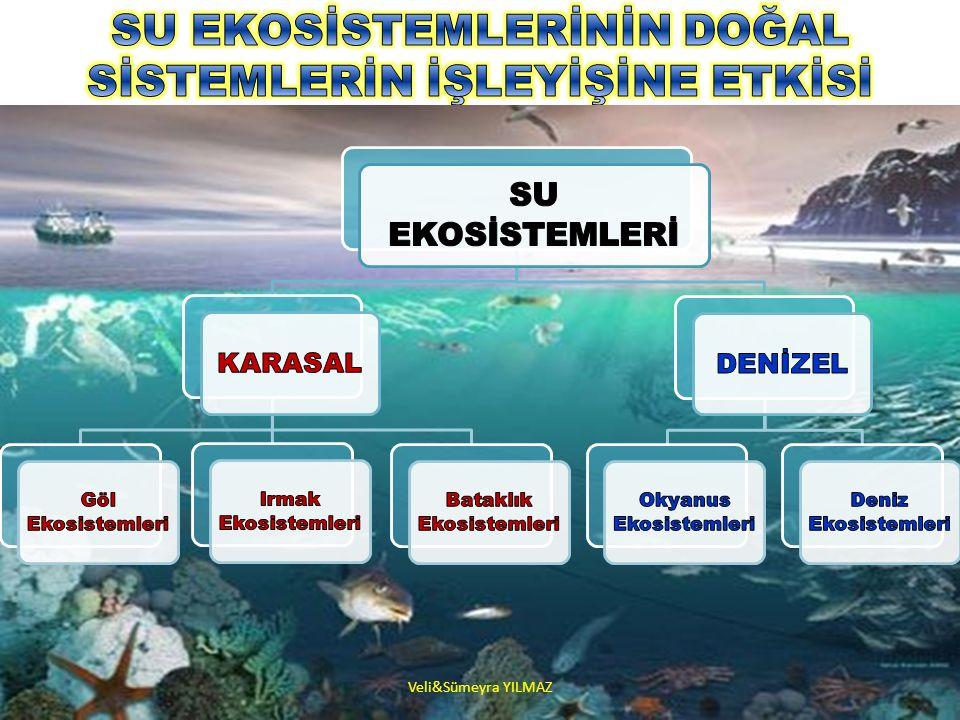 Veli&Sümeyra YILMAZ KARASAL SU EKOSİSTEMLERİ ( TATLI SU BİYOMLARI) Akarsular, göller, sulak alanlar ve bataklıklar tatlı su biyomlarını oluşturmaktadır.