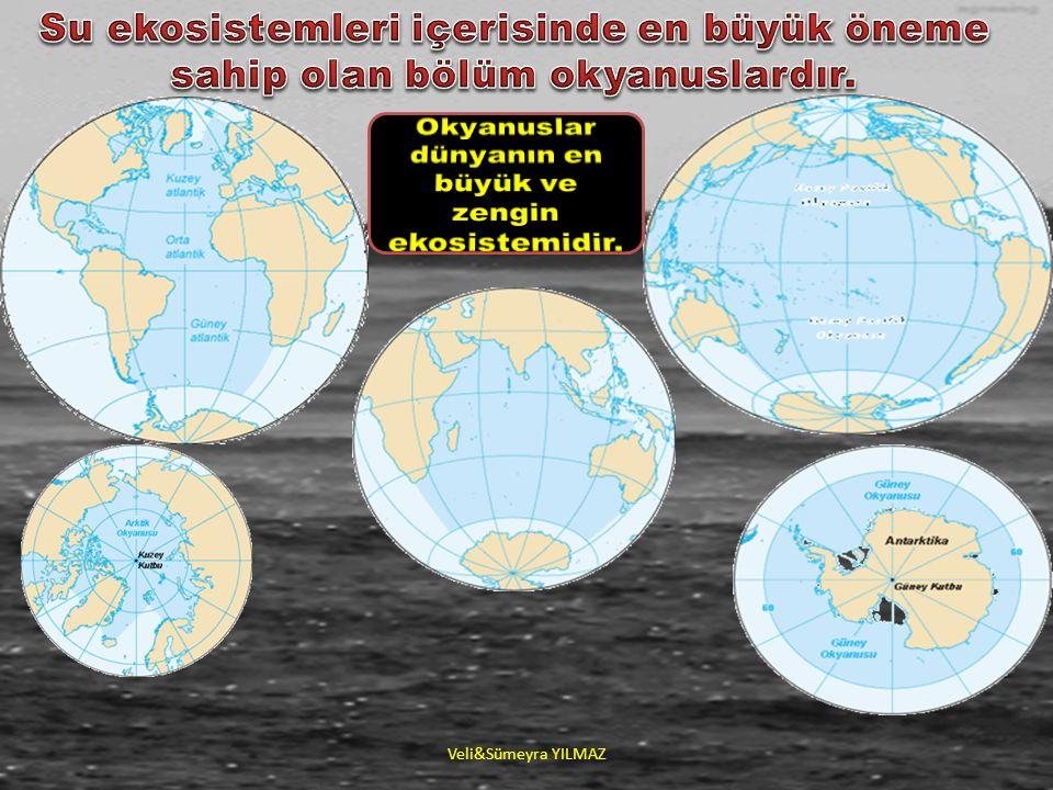 ►Atmosferdeki oksijenin %70i bu alanlarda yenilenmektedir (Planktonlar sayesinde).