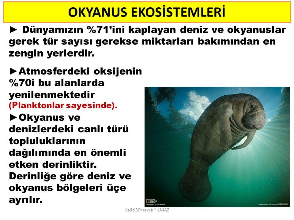 A- NERİTİK ALAN diye adlandırılan, 200 m derinliğe kadar olan deniz ortamı, tür topluluklarının en zengin oldukları bölgeyi oluşturmaktadır.