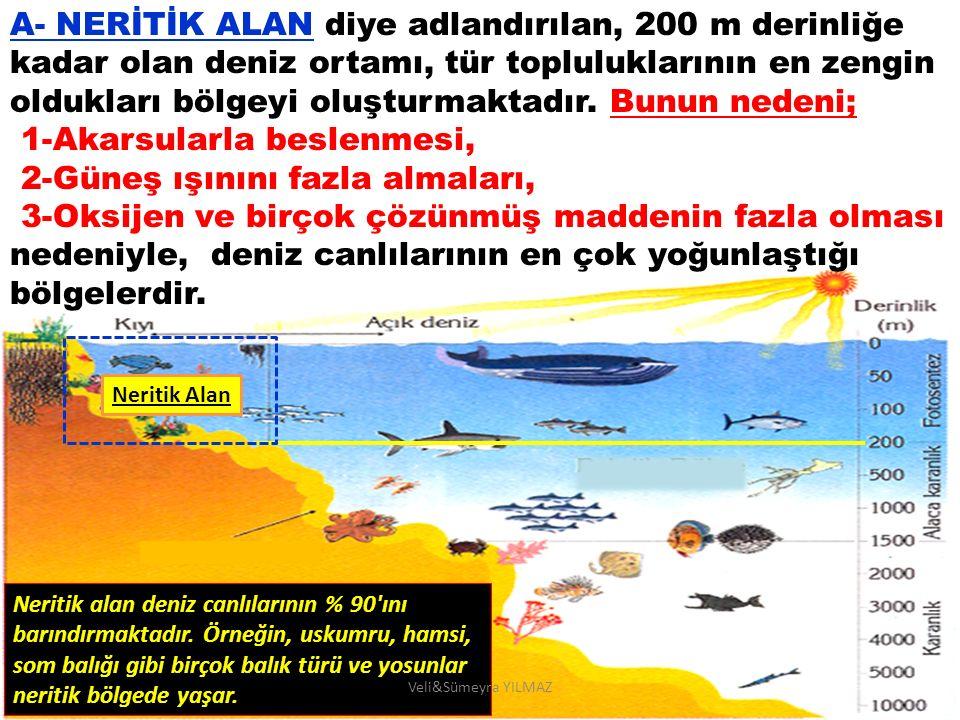 A- NERİTİK ALAN diye adlandırılan, 200 m derinliğe kadar olan deniz ortamı, tür topluluklarının en zengin oldukları bölgeyi oluşturmaktadır. Bunun ned