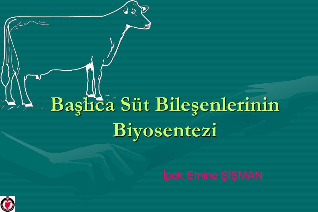 Başlıca Süt Bileşenlerinin Biyosentezi İpek Emine ŞİŞMAN