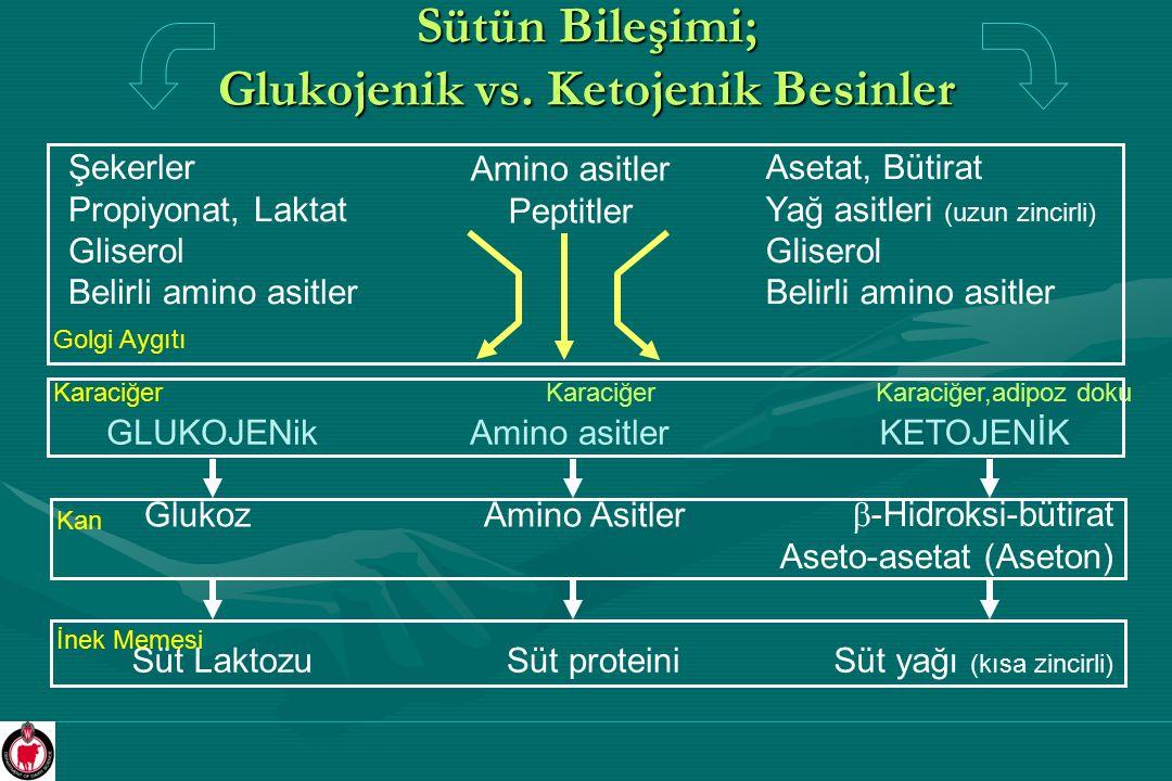 Sütün Bileşimi; Glukojenik vs. Ketojenik Besinler Glukoz  -Hidroksi-bütirat Aseto-asetat (Aseton) Amino Asitler Kan Şekerler Propiyonat, Laktat Glise
