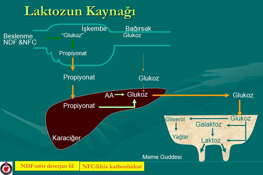 Laktozun Biyosentezi O OH O CH 2 OH O CH 2 OH GalaktozGlukoz KaraciğerSalgı Hücresi Glukoz Kan CH 3 CH 2 C O O - Propiyonat Glukojenik amino-asidler (glutamat, aspartat serine, vb.) Glukoz-P Galaktoz Glukoz A B A = galaktozill transferaz; B = alfa laktalbumin LAKTOZ Golgi Aparatı Su
