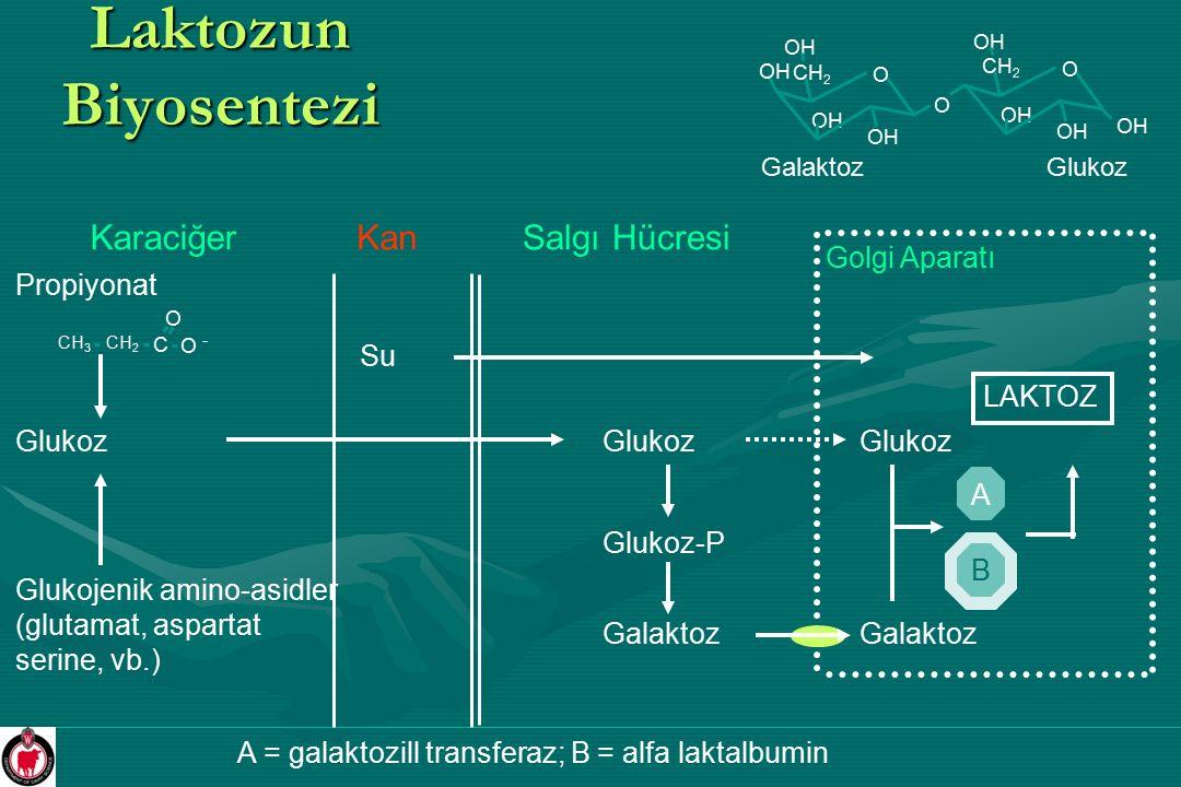 Laktozun Biyosentezi O OH O CH 2 OH O CH 2 OH GalaktozGlukoz KaraciğerSalgı Hücresi Glukoz Kan CH 3 CH 2 C O O - Propiyonat Glukojenik amino-asidler (