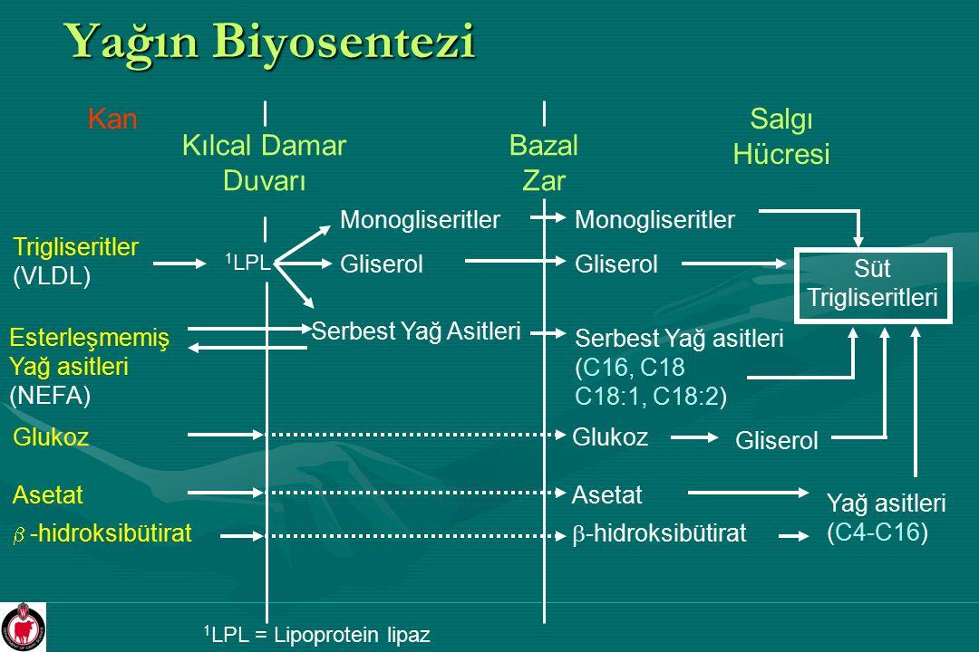 Yağın Biyosentezi Kan Kılcal Damar Duvarı Bazal Zar Salgı Hücresi Trigliseritler (VLDL) Esterleşmemiş Yağ asitleri (NEFA) Gliserol Monogliseritler Ser