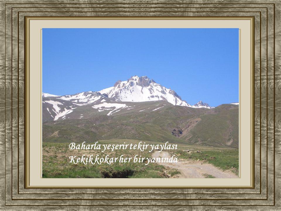Yine karlar yağmış üstüne Giyinmişsin beyaz gelinliğini üzerine Benziyorsun ela gözlü dilber geline Kadehi kar kucağı yar Erciyes