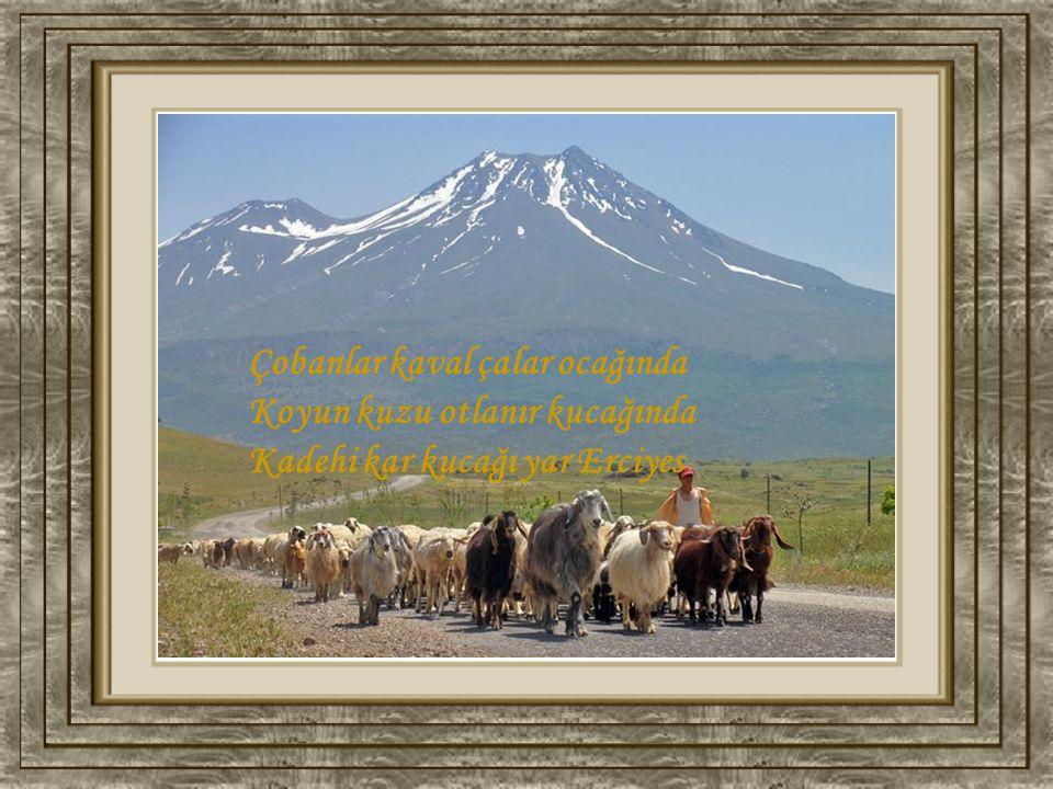 Çobanlar kaval çalar ocağında Koyun kuzu otlanır kucağında Kadehi kar kucağı yar Erciyes