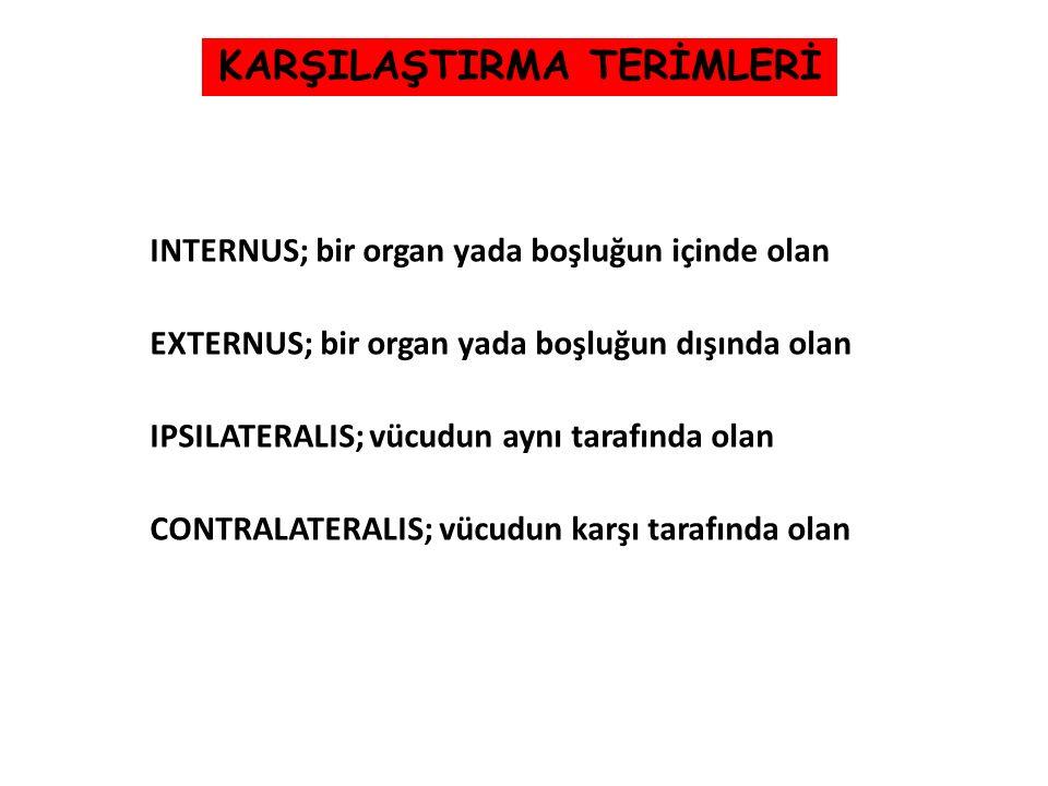 INTERNUS; bir organ yada boşluğun içinde olan EXTERNUS; bir organ yada boşluğun dışında olan IPSILATERALIS; vücudun aynı tarafında olan CONTRALATERALI